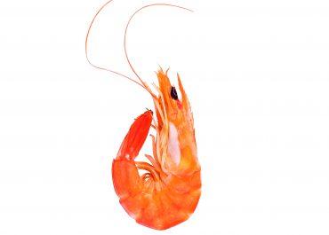 El camarón: el primero de los no petroleros
