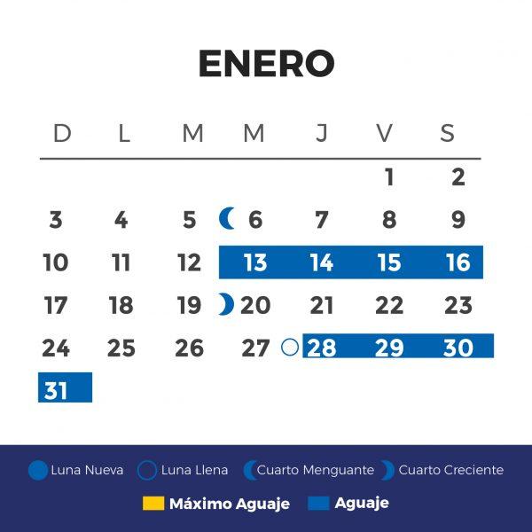 ENERO-01